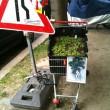 Guerilla Gardening Einkaufswagen