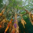 mangroves-615