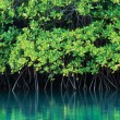 australia_qld_hinchinbrook_mangroves_2
